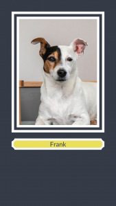 Frank the Jack Russell for PG Pack handmade wooden dog bed