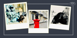 PG Pack member Lexi the king charles cavalier spaniel shows us around her home city of bristol